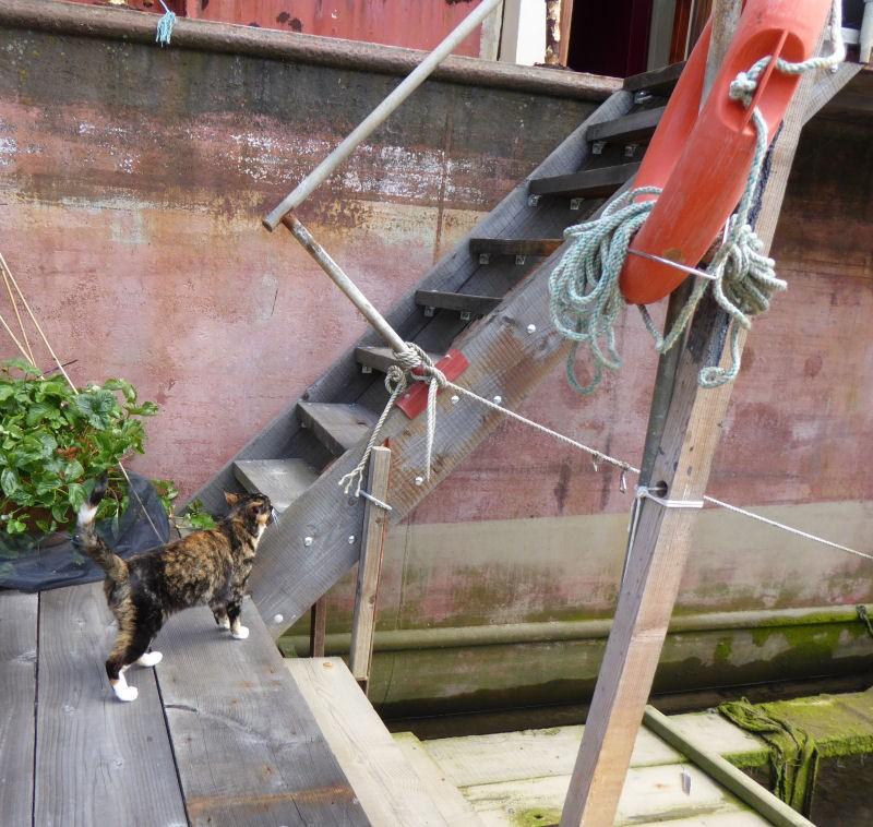 cat'n'steps